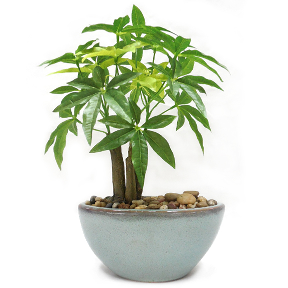 Artificial Pachira Bonsai Plant with ceramic Pot
