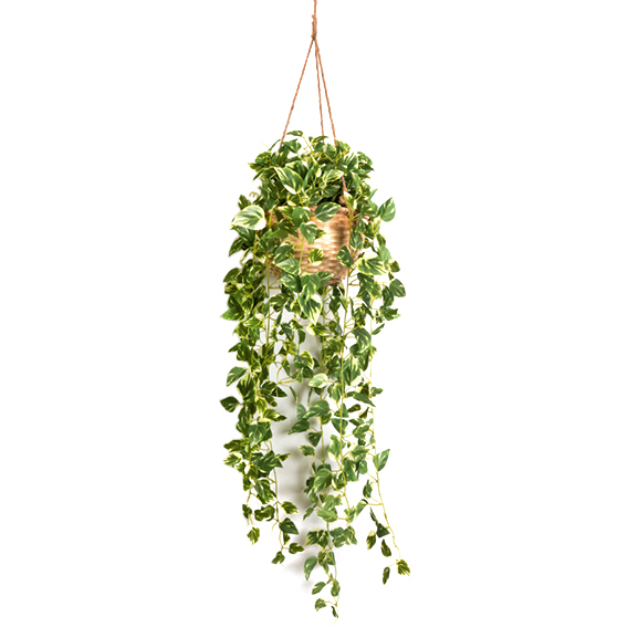 Beautiful Artificial Money Plant Hanging in Cane Basket