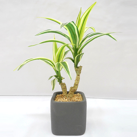 Natural Looking Artificial Dracaena Bonsai Plant with ceramic Pot