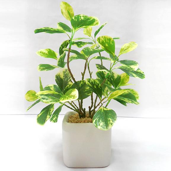 Artificial Jade Leaf Bonsai Plant with ceramic Pot