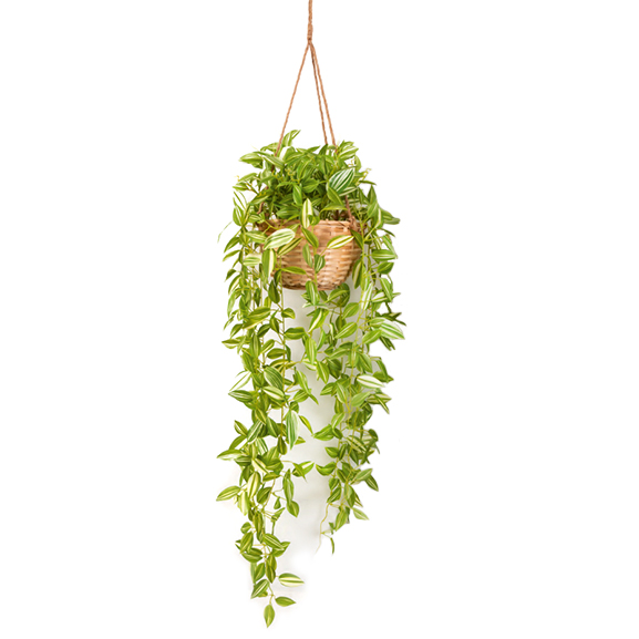 Beautiful Artificial Plant Hanging in Cane Basket