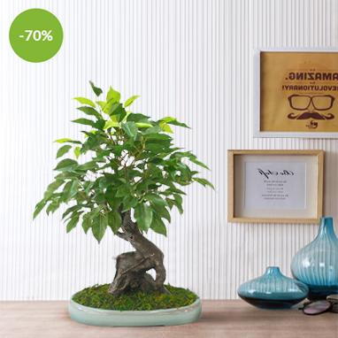 Promotional-Offers-&-Deals-Ad-382-x-382-pixels---NEW3