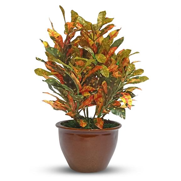 Artificial Croton Bonsai Plant