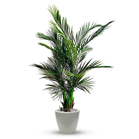 Artificial Areca Palm Plant for Decoration